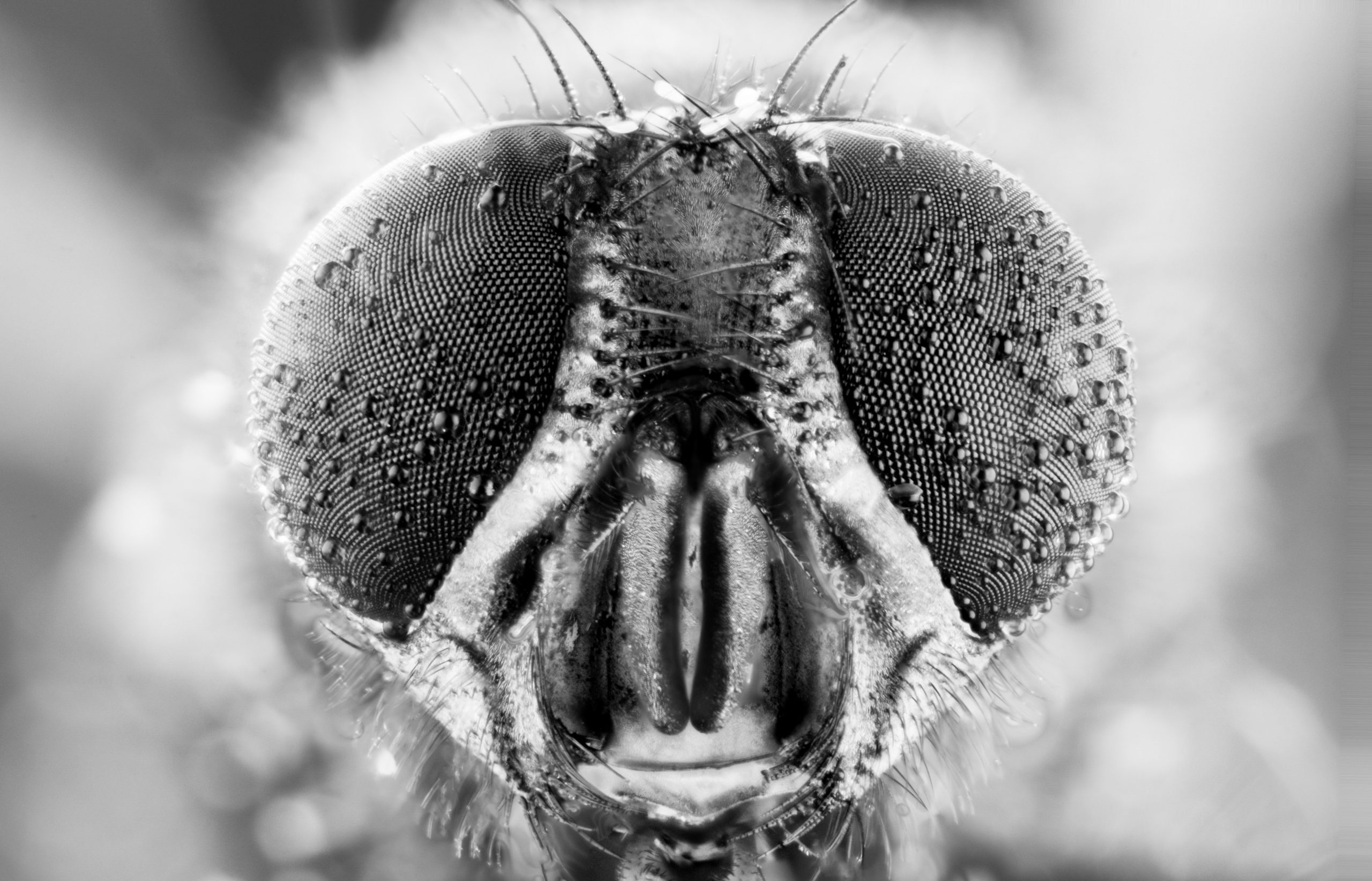 fly macro insect nature animal eye bug close small wildlife head